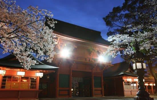 夜桜照明導入設置事例